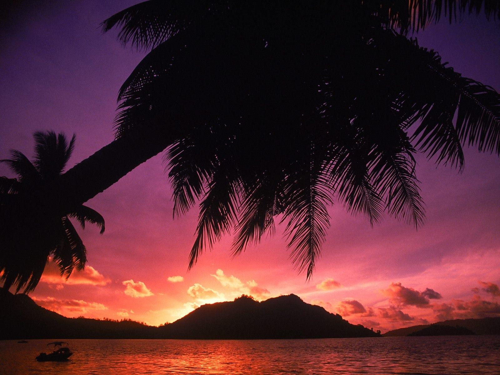 4339 скачать обои Пейзаж, Закат, Море, Пальмы - заставки и картинки бесплатно