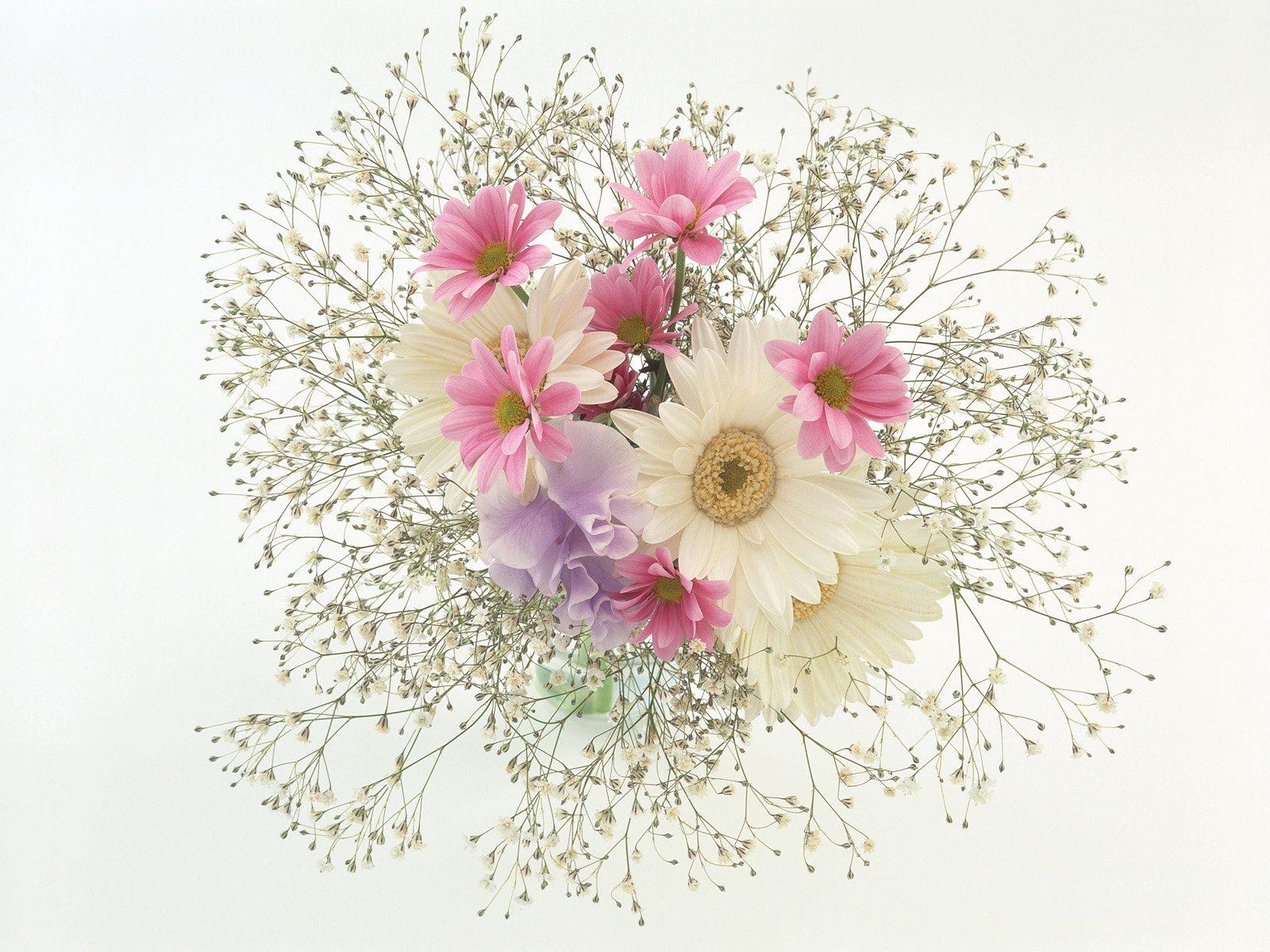 15190 descargar fondo de pantalla Plantas, Flores: protectores de pantalla e imágenes gratis