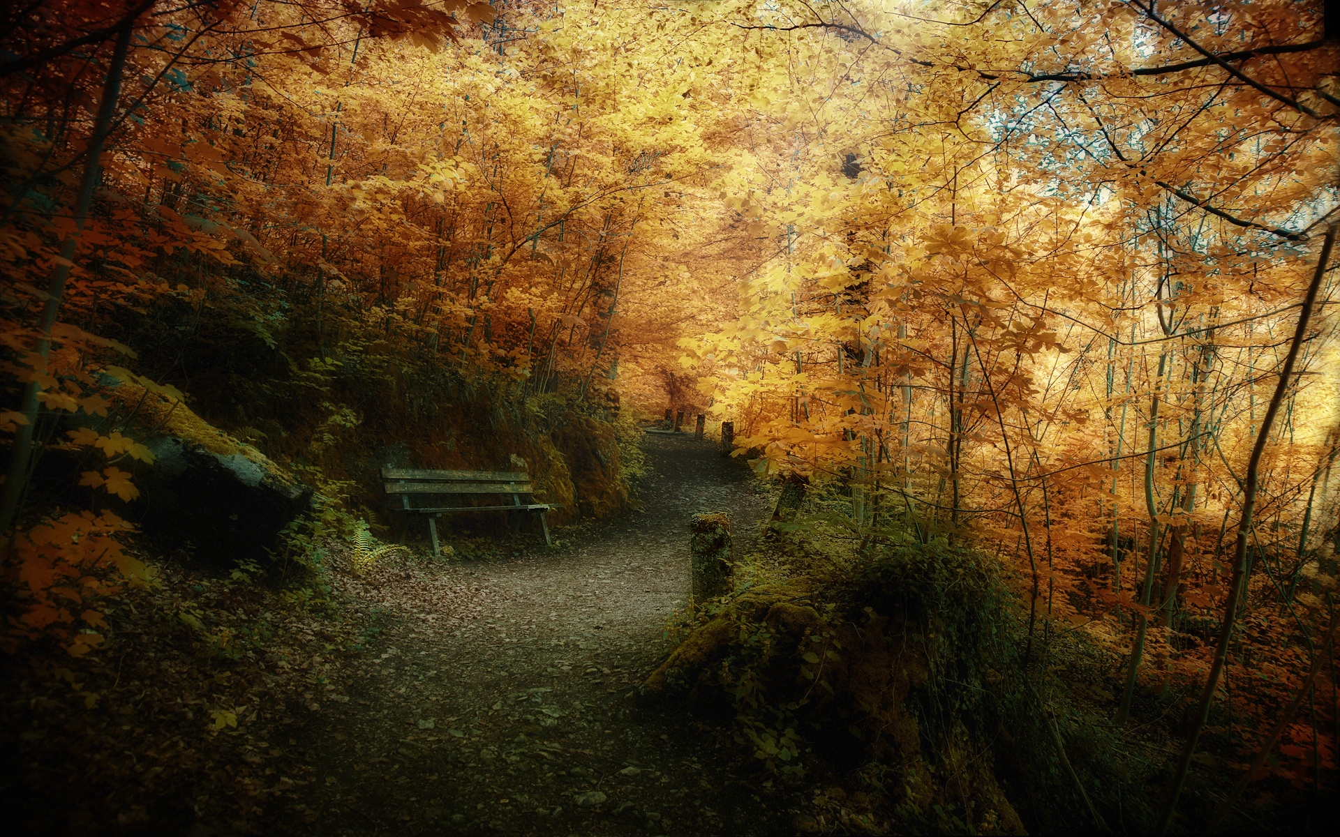 33338 download wallpaper Landscape, Trees, Autumn screensavers and pictures for free