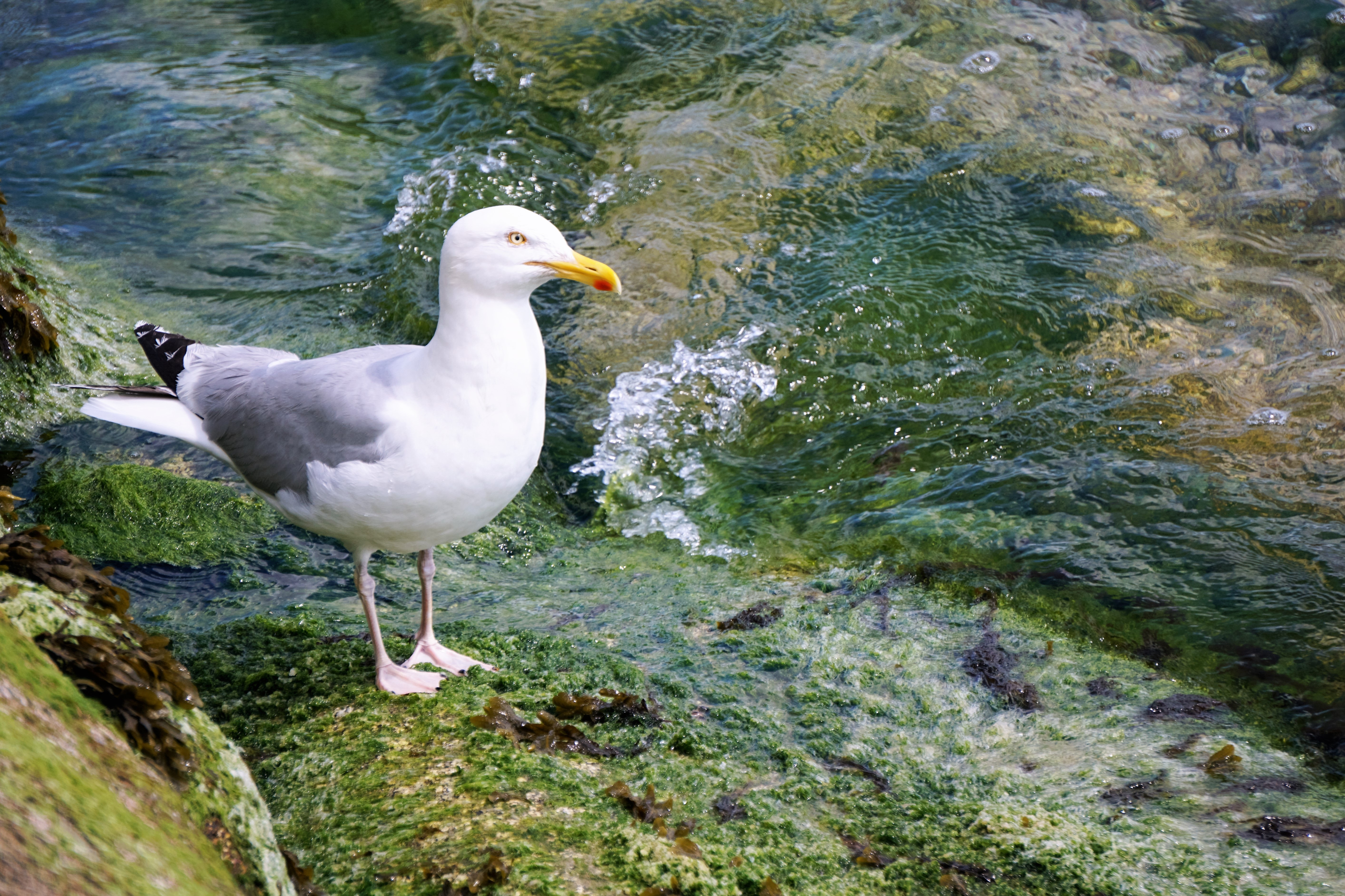 105180 download wallpaper Animals, Gull, Seagull, Bird, Sea Bird, Seabird, Water screensavers and pictures for free
