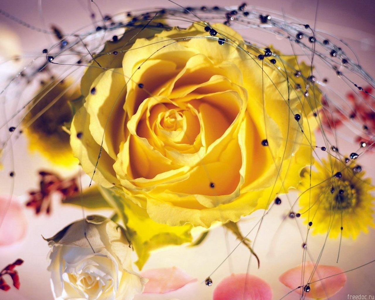 3836 скачать обои Растения, Цветы, Розы - заставки и картинки бесплатно