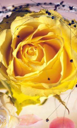 3836 descargar fondo de pantalla Plantas, Flores, Roses: protectores de pantalla e imágenes gratis