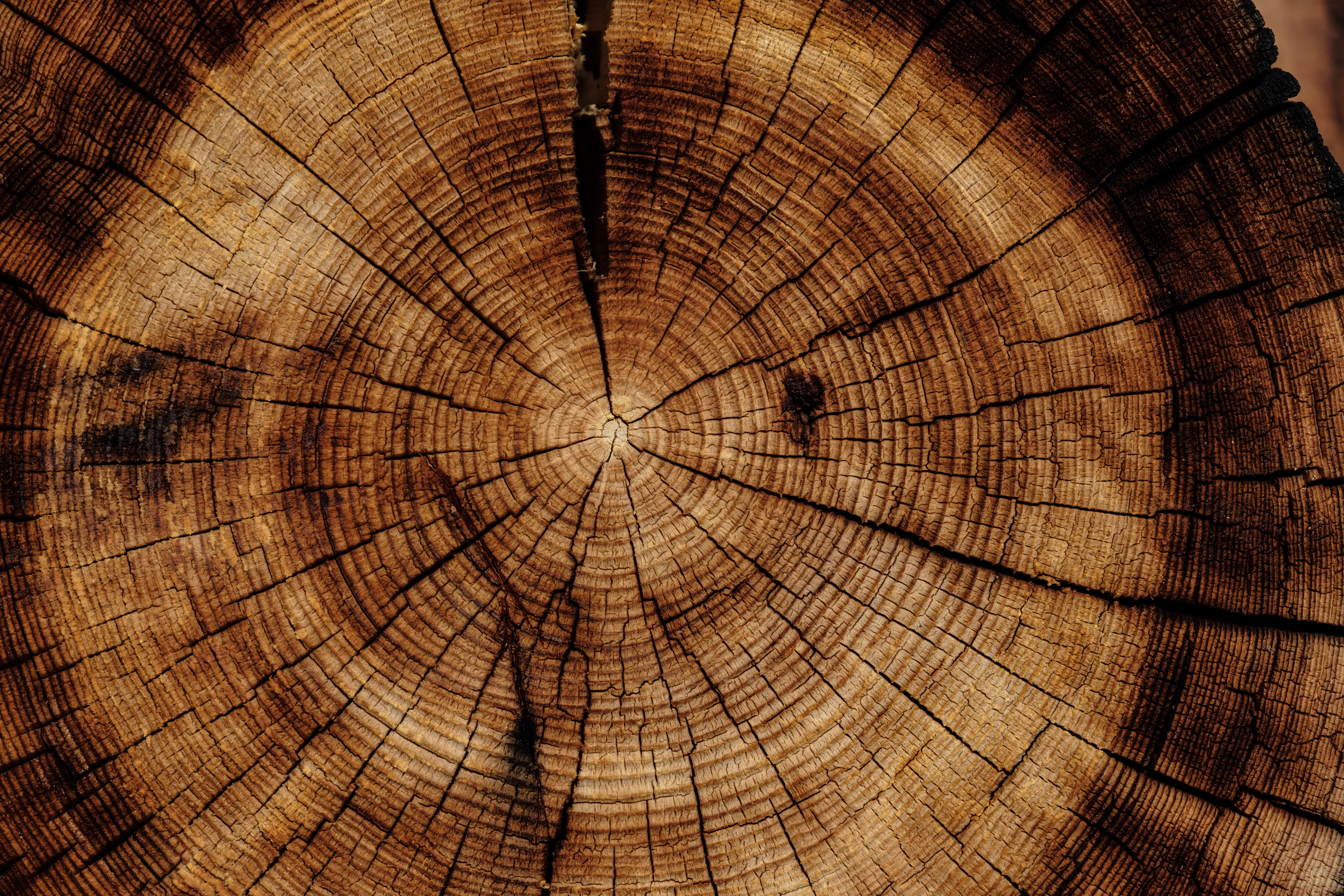 153962 download wallpaper Textures, Wood, Tree, Texture, Trunk screensavers and pictures for free