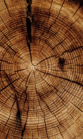 153962 Screensavers and Wallpapers Textures for phone. Download Textures, Texture, Trunk, Wood, Tree pictures for free