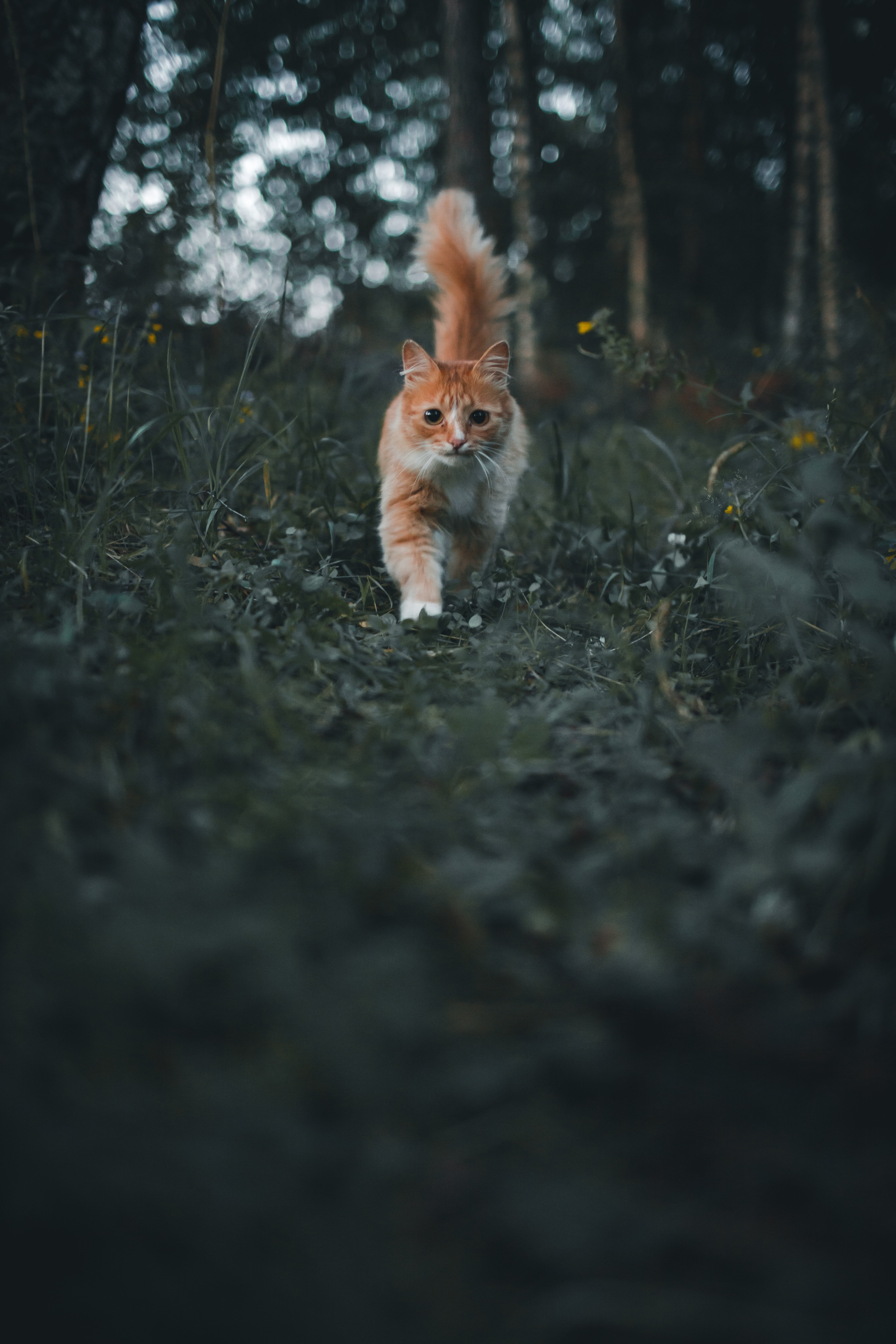 117003 download wallpaper Animals, Cat, Pet, Fluffy, Nice, Sweetheart, Grass screensavers and pictures for free