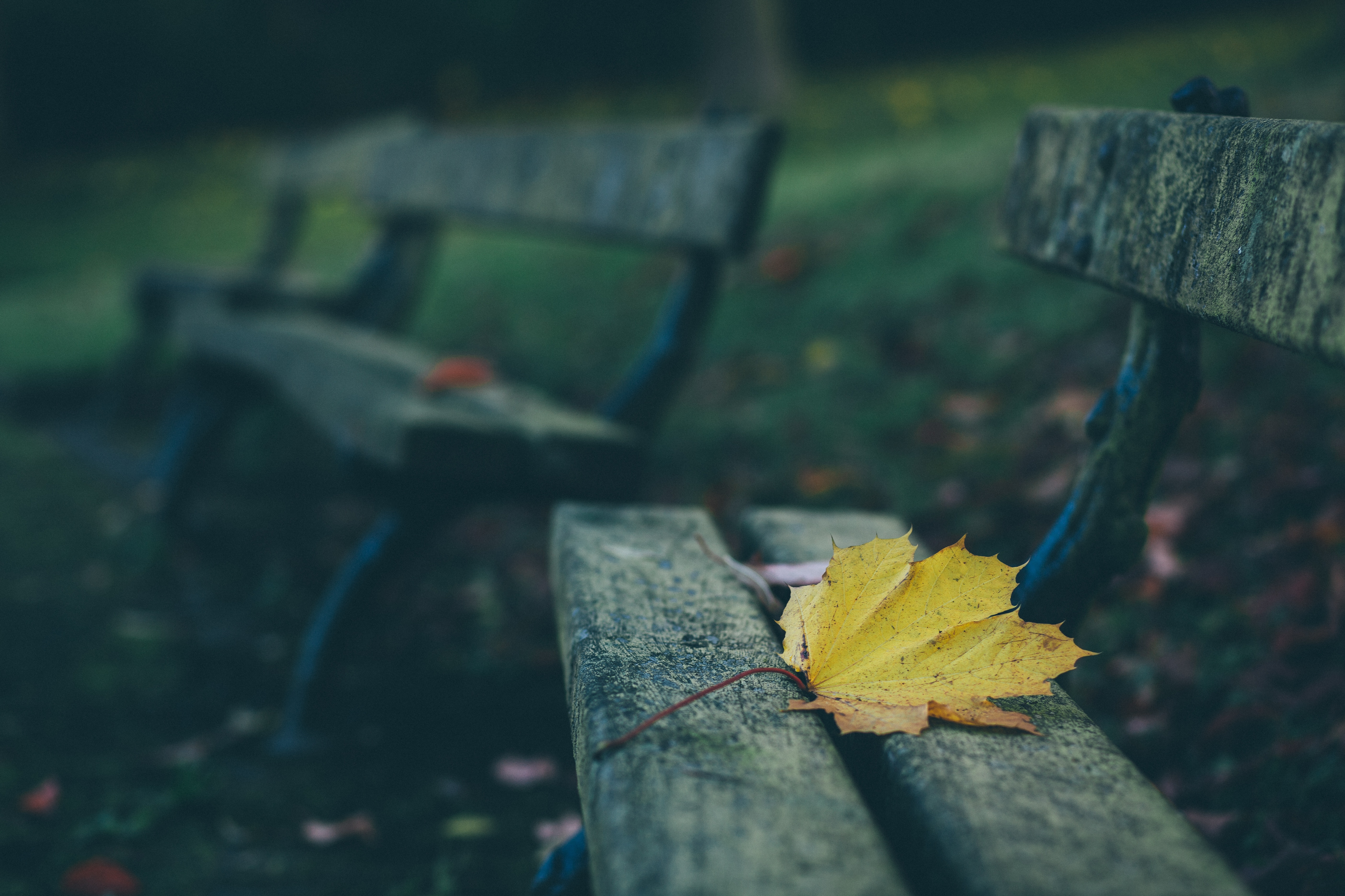 126742 Screensavers and Wallpapers Bench for phone. Download Nature, Autumn, Sheet, Leaf, Bench pictures for free