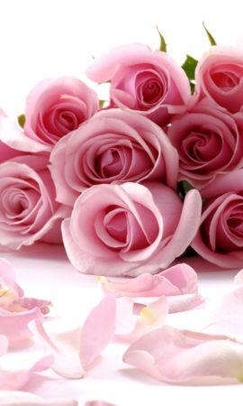 7875 descargar fondo de pantalla Vacaciones, Flores, Roses, Postales, 8 De Marzo, Día De La Mujer: protectores de pantalla e imágenes gratis