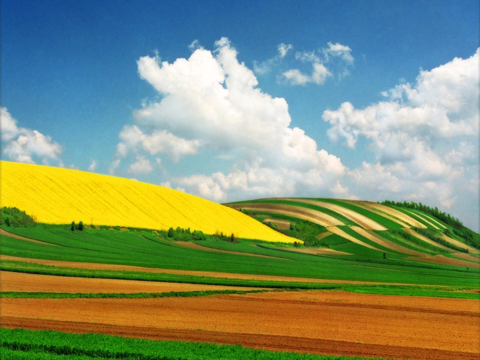 9204 скачать обои Пейзаж, Природа, Поля, Небо, Облака - заставки и картинки бесплатно