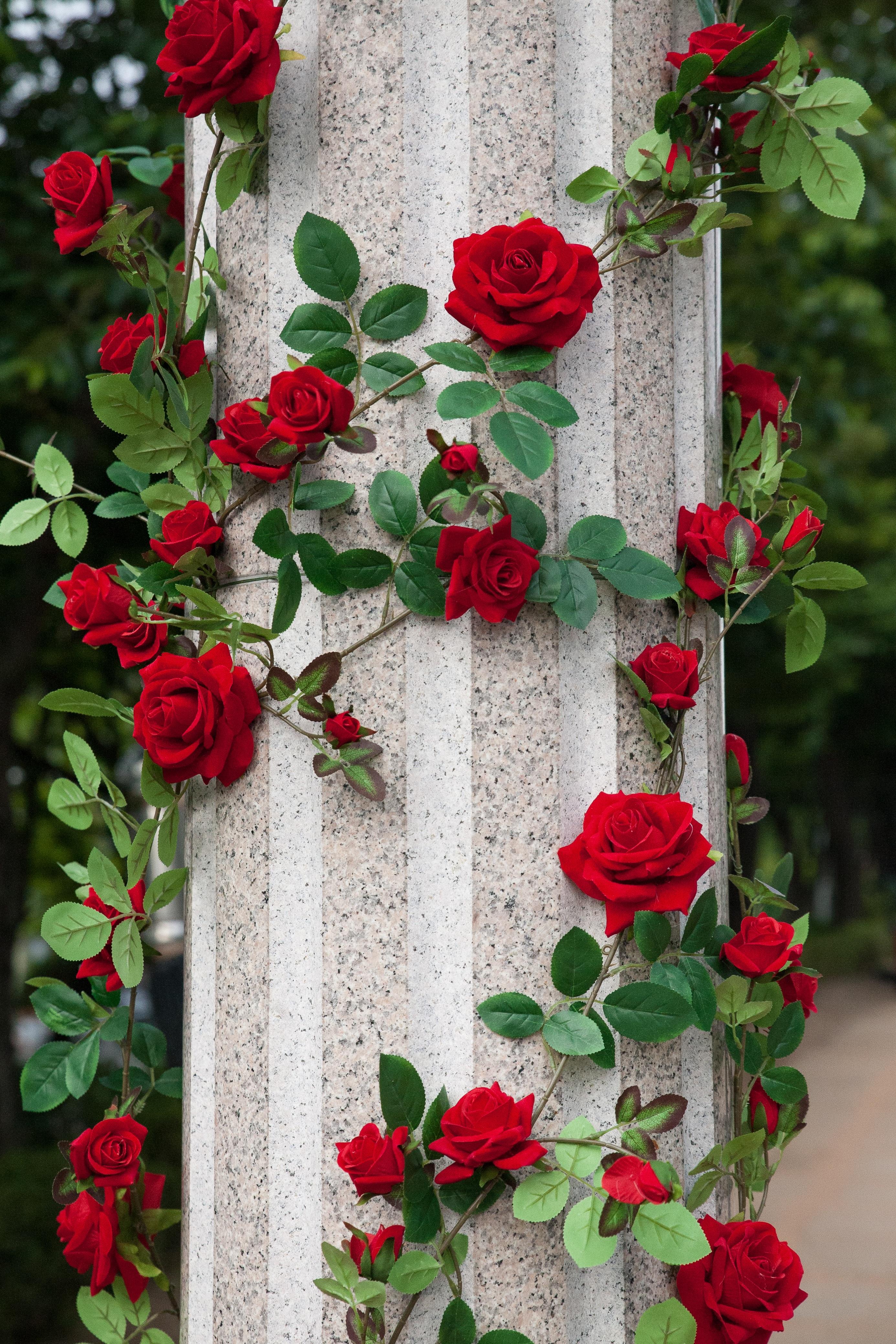 103658 скачать обои Розы, Оформление, Цветы, Сад, Колонна, Декорирование - заставки и картинки бесплатно