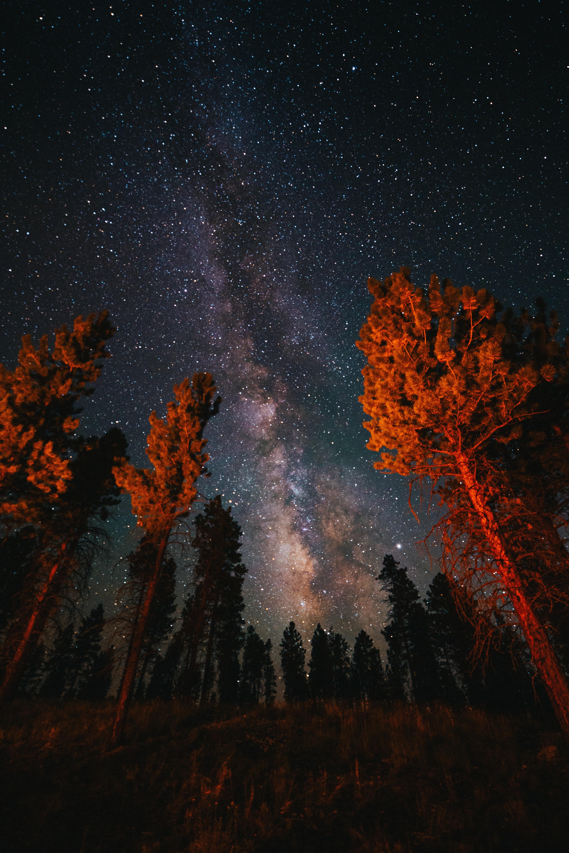 126873 скачать обои Темные, Деревья, Звездное Небо, Ночь, Природа, Темный - заставки и картинки бесплатно