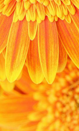14929 descargar fondo de pantalla Plantas, Flores, Fondo: protectores de pantalla e imágenes gratis