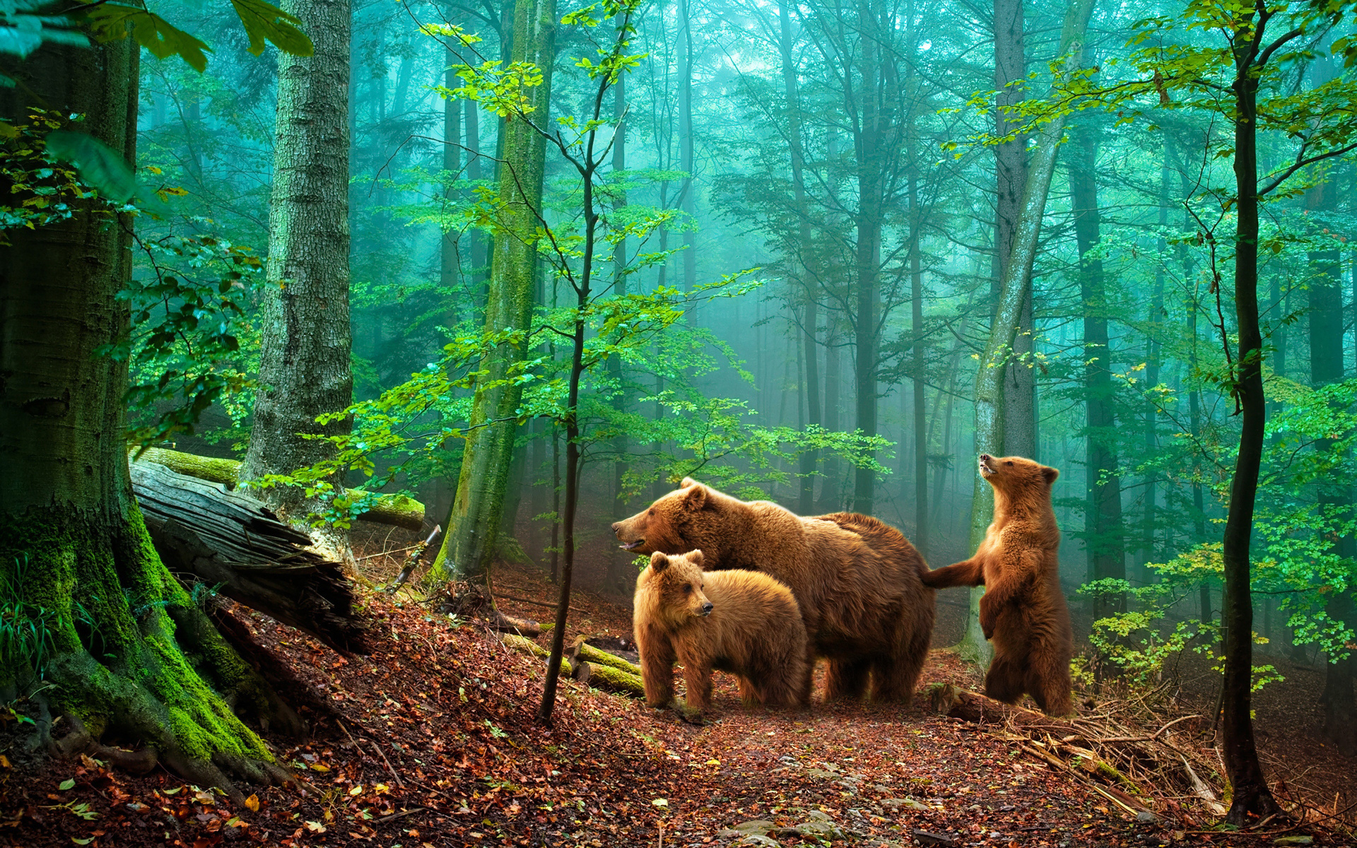 40410 download wallpaper Animals, Bears screensavers and pictures for free