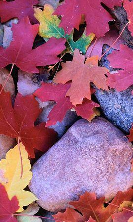 5643 скачать обои Растения, Фон, Камни, Листья - заставки и картинки бесплатно