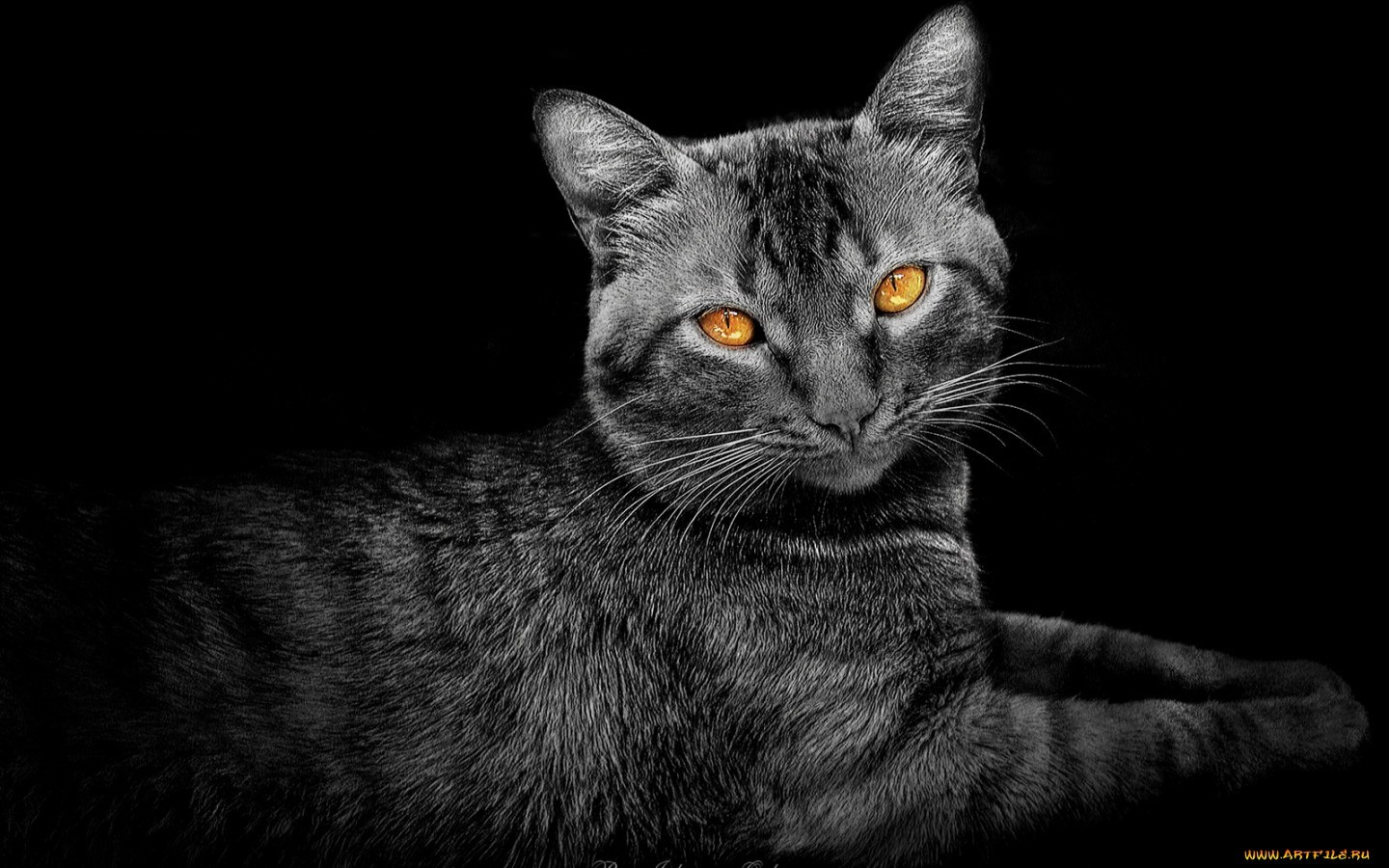 14614 download wallpaper Animals, Cats, Art Photo screensavers and pictures for free