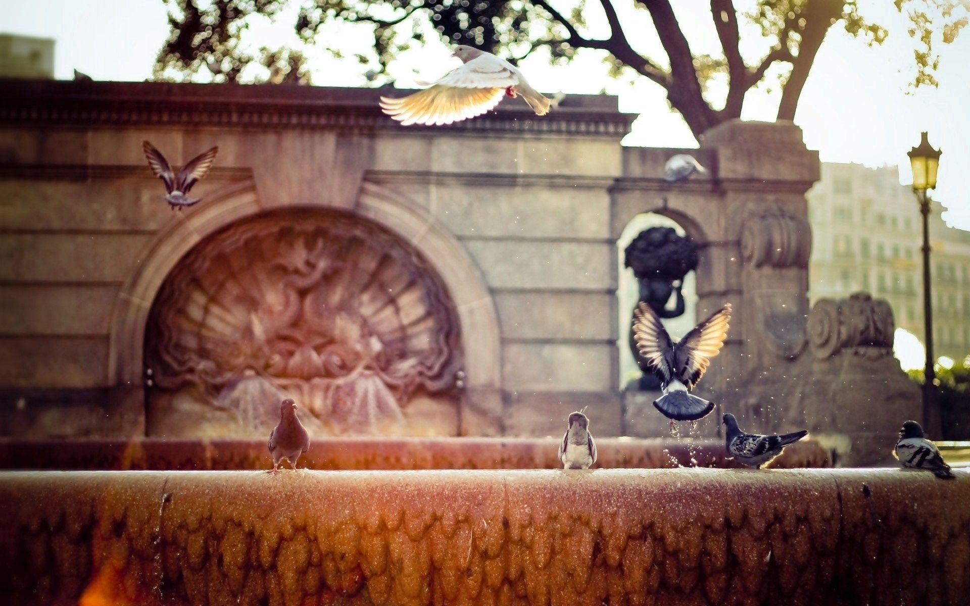 132673 Screensavers and Wallpapers Fountain for phone. Download Animals, Pigeons, Fountain, Wings, Wave, Sweep pictures for free