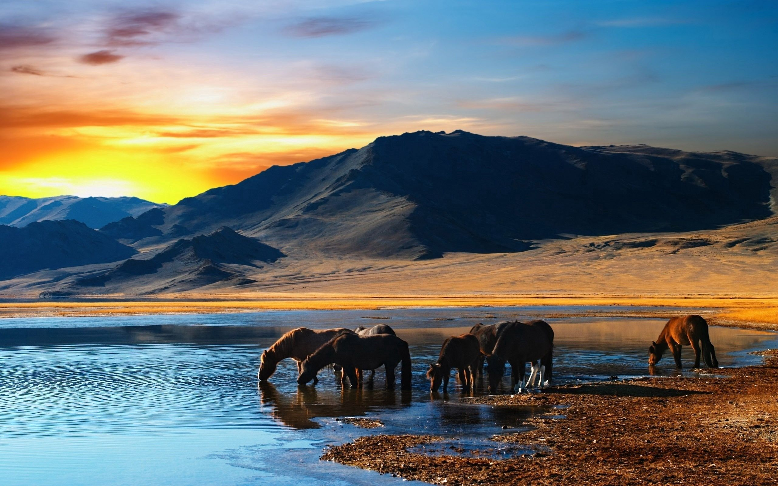 139251 download wallpaper Horses, Animals, Water, Sunset, Mountains, Shore, Bank, Drink, Herd, Thirst screensavers and pictures for free