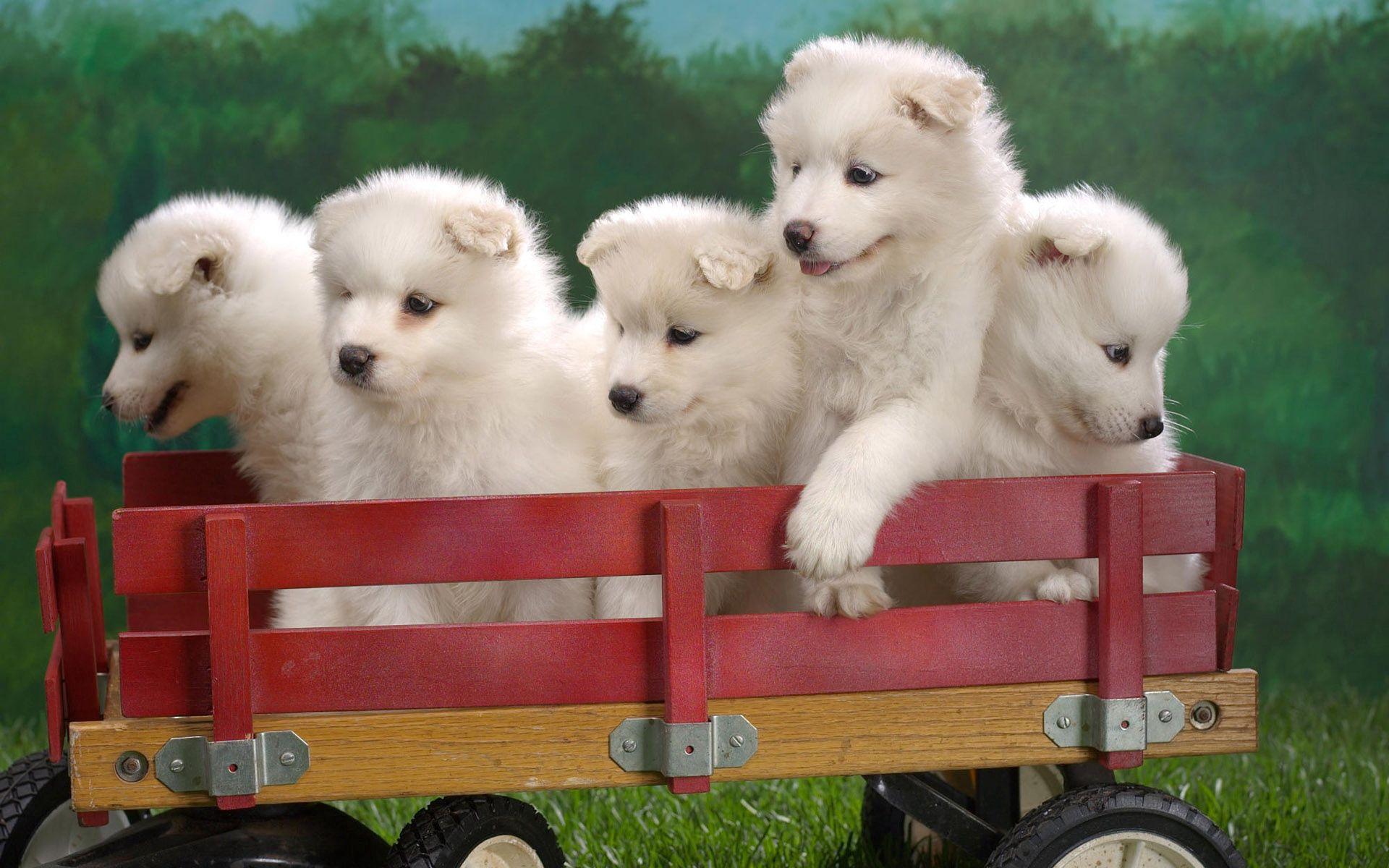 54676 免費下載壁紙 动物, 小狗, 卡车, 手推车, 坐, 坐下, 很多, 设置, 玩具 屏保和圖片