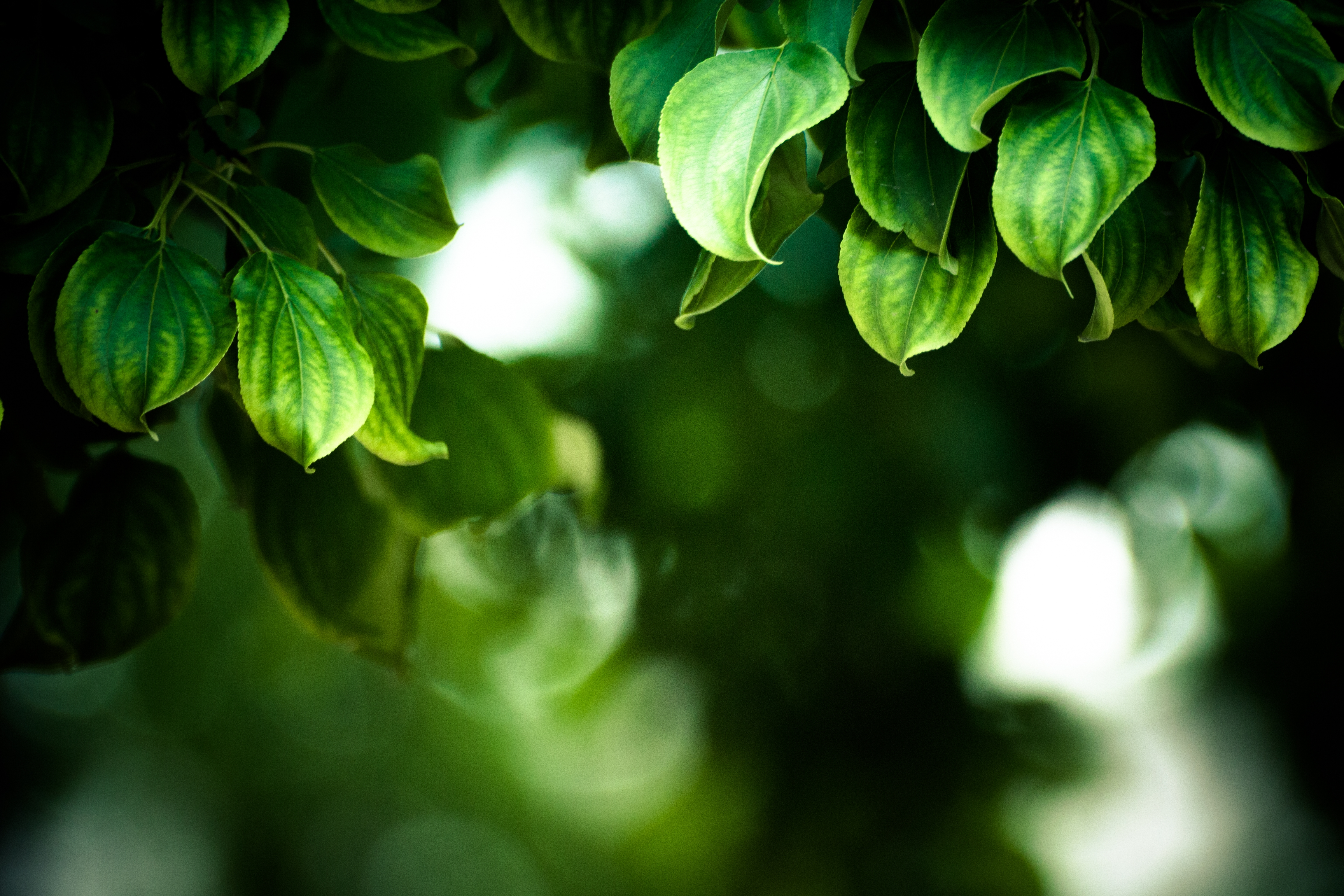 119332 download wallpaper Macro, Branches, Leaves screensavers and pictures for free