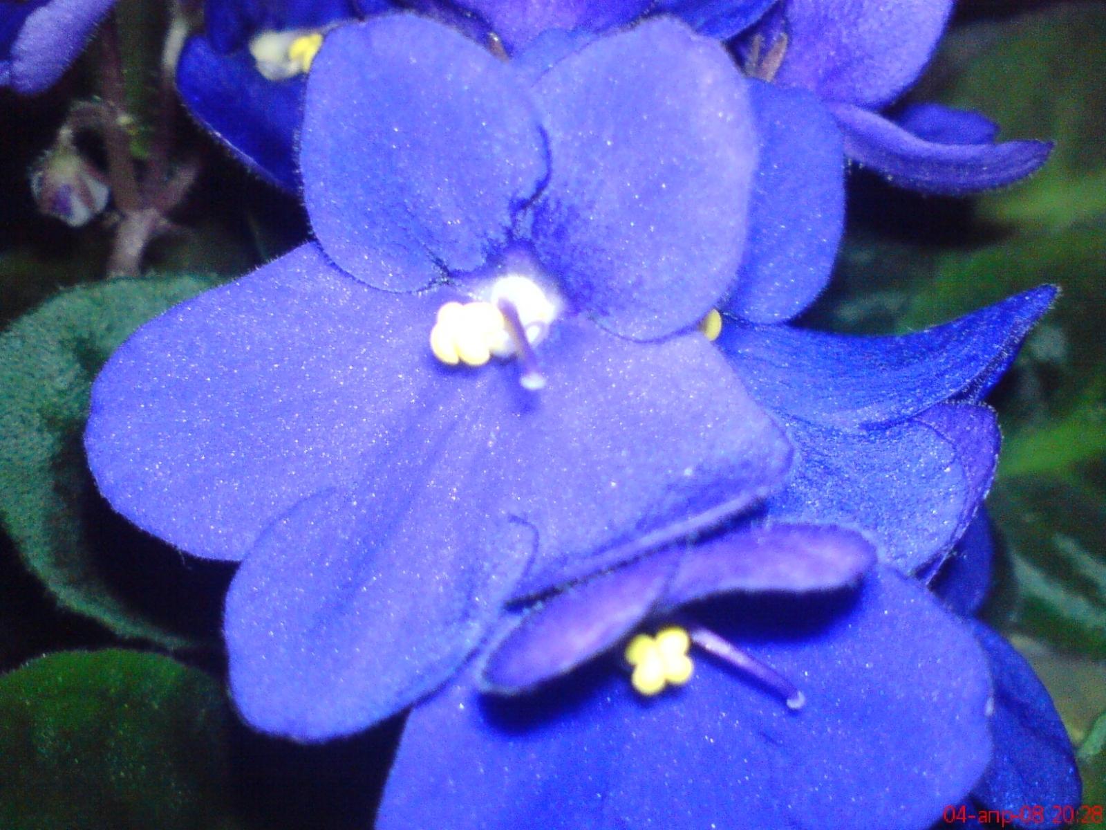 4416 скачать обои Растения, Цветы - заставки и картинки бесплатно