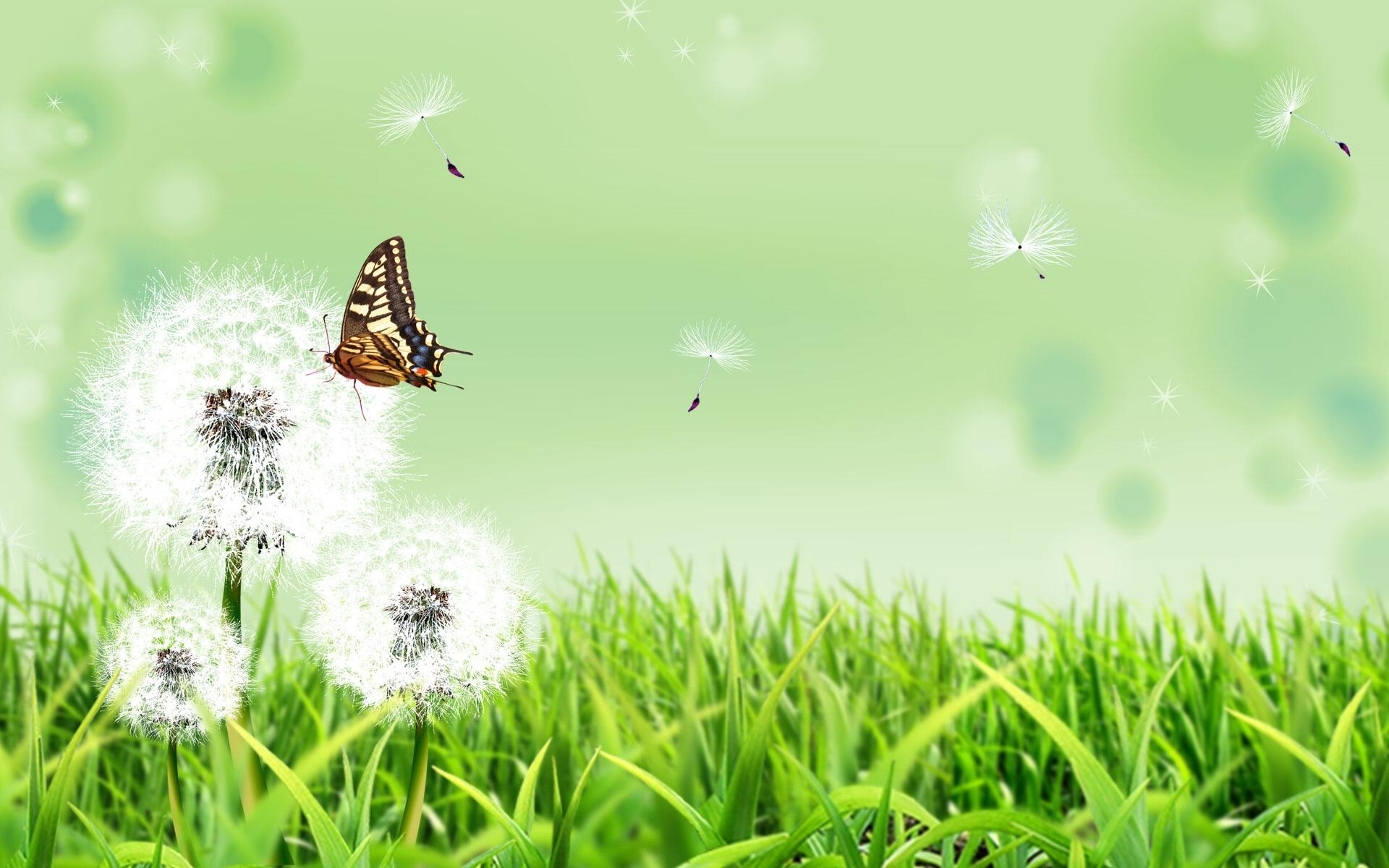 36582 descargar fondo de pantalla Mariposas, Insectos, Imágenes: protectores de pantalla e imágenes gratis