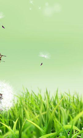36582 скачать обои Бабочки, Насекомые, Рисунки - заставки и картинки бесплатно