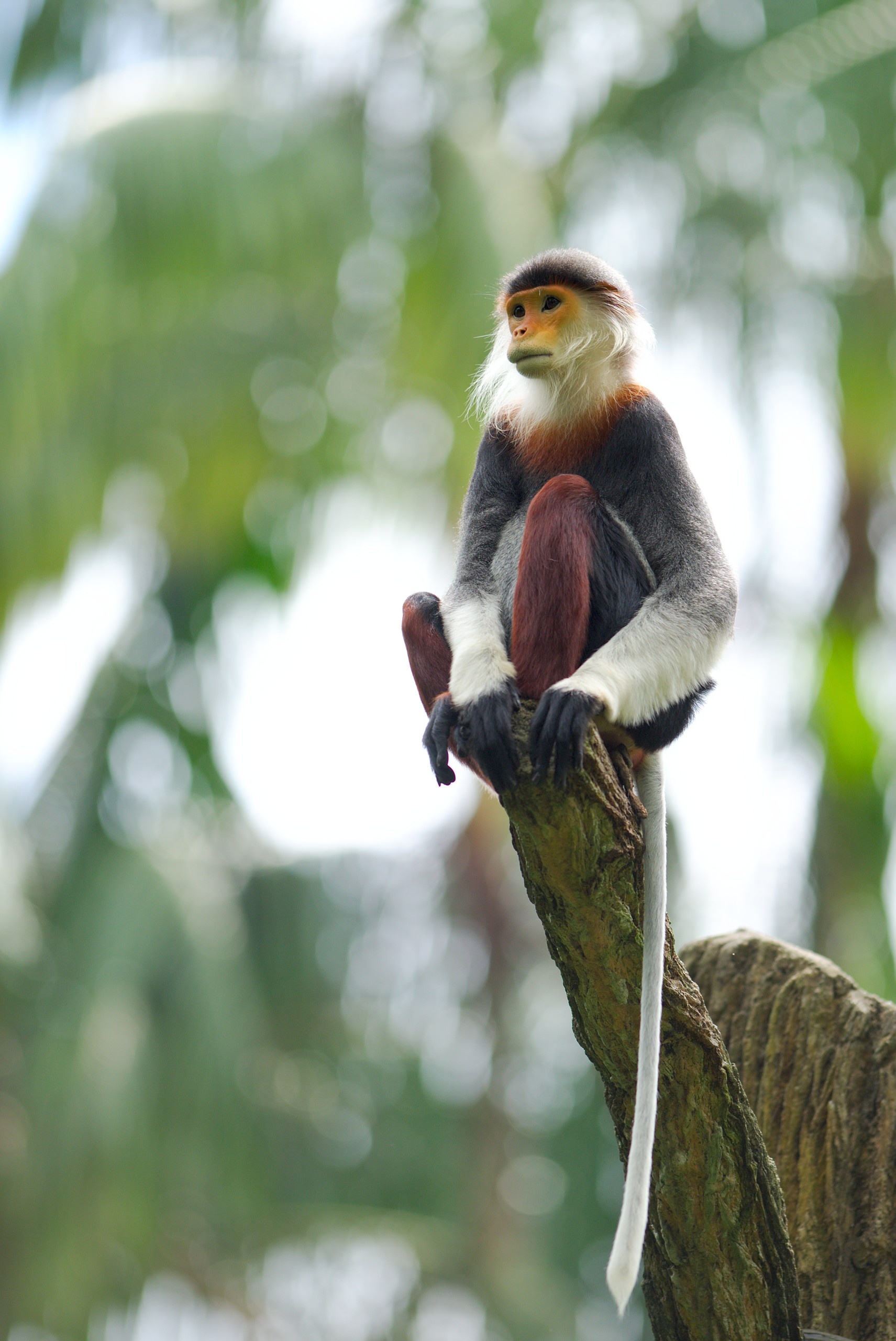 122659 download wallpaper Animals, Toque, Macaque, Monkey, Animal, Wood, Tree, Tail screensavers and pictures for free