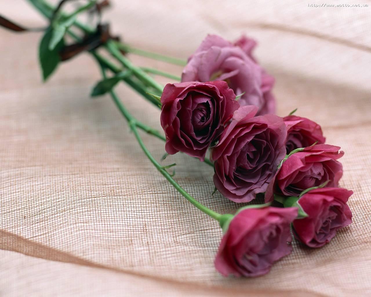 7656 скачать обои Праздники, Растения, Цветы, Розы, Открытки, 8 Марта - заставки и картинки бесплатно