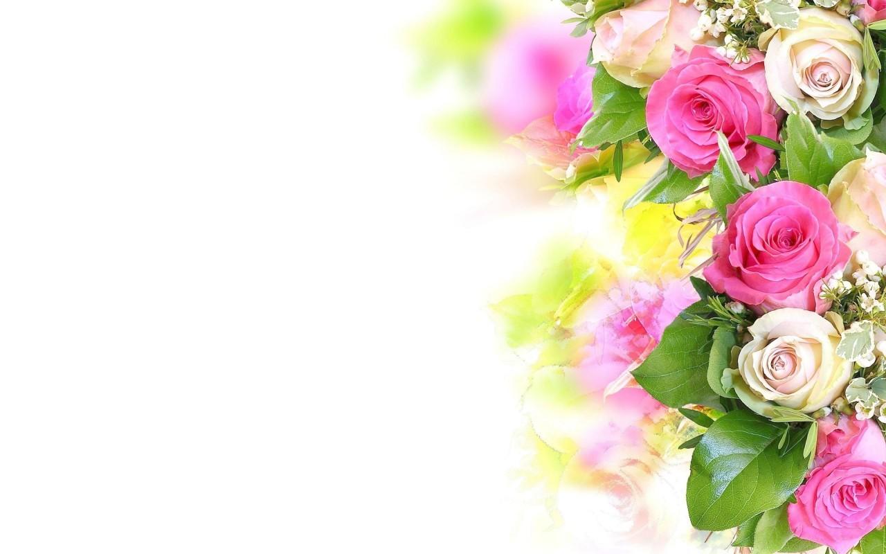 20542 télécharger le fond d'écran Plantes, Fleurs, Roses - économiseurs d'écran et images gratuitement