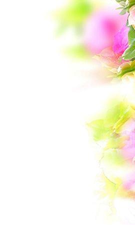 20542 baixar papel de parede Plantas, Flores, Rosas - protetores de tela e imagens gratuitamente