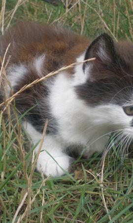 2725 descargar fondo de pantalla Animales, Gatos: protectores de pantalla e imágenes gratis