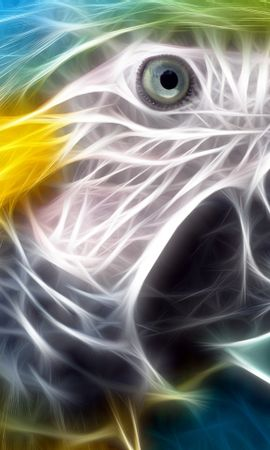 44963 baixar papel de parede Animais, Aves, Fundo, Papagaios - protetores de tela e imagens gratuitamente