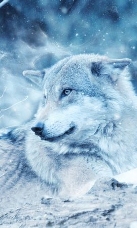 93151 download wallpaper Animals, Wolf, Predator, Photoshop, Sight, Opinion screensavers and pictures for free