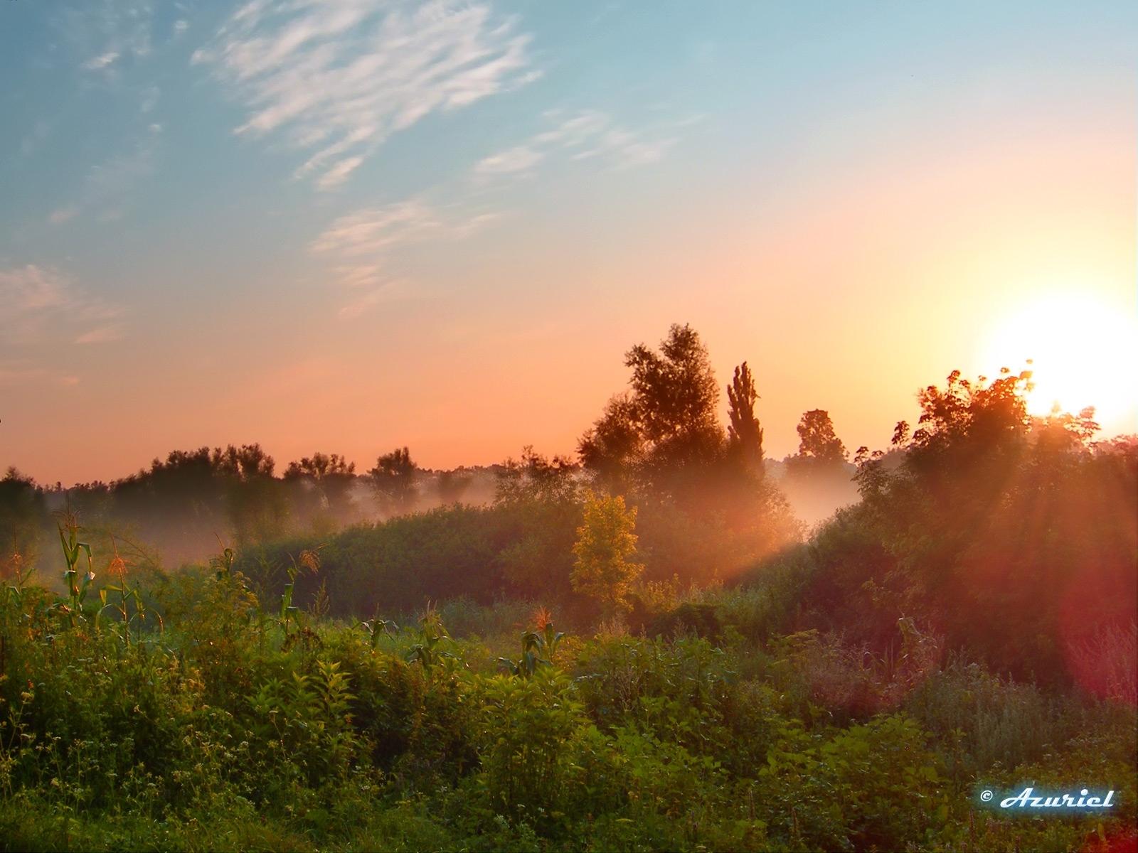 1716 скачать обои Растения, Пейзаж, Закат, Небо, Солнце - заставки и картинки бесплатно