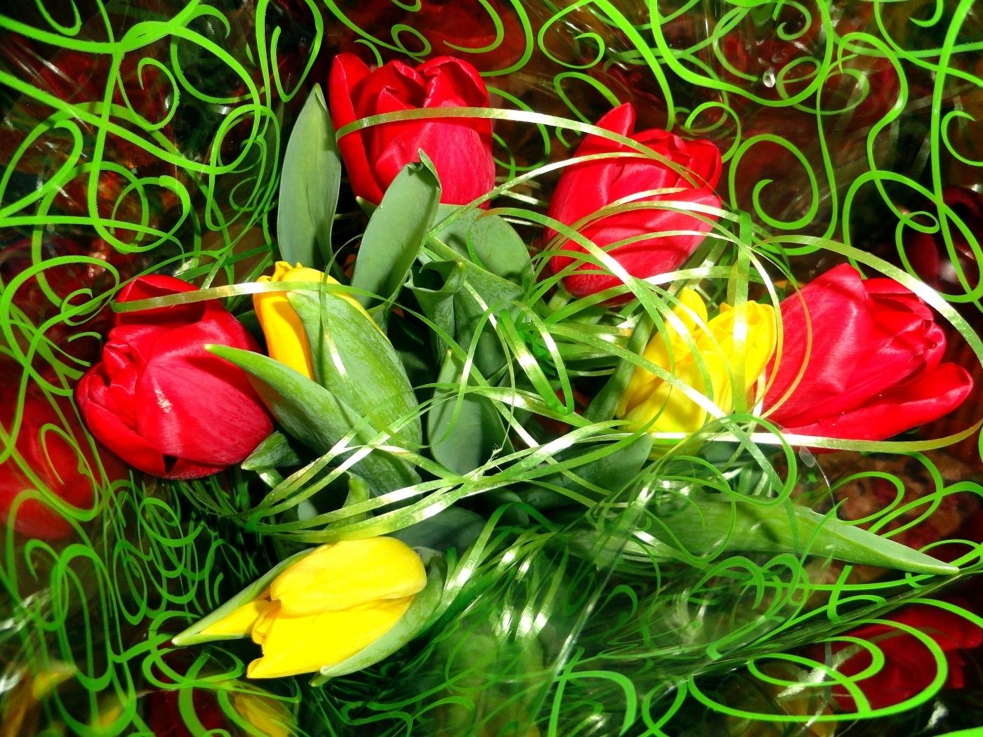 25707 скачать обои Растения, Цветы, Тюльпаны - заставки и картинки бесплатно
