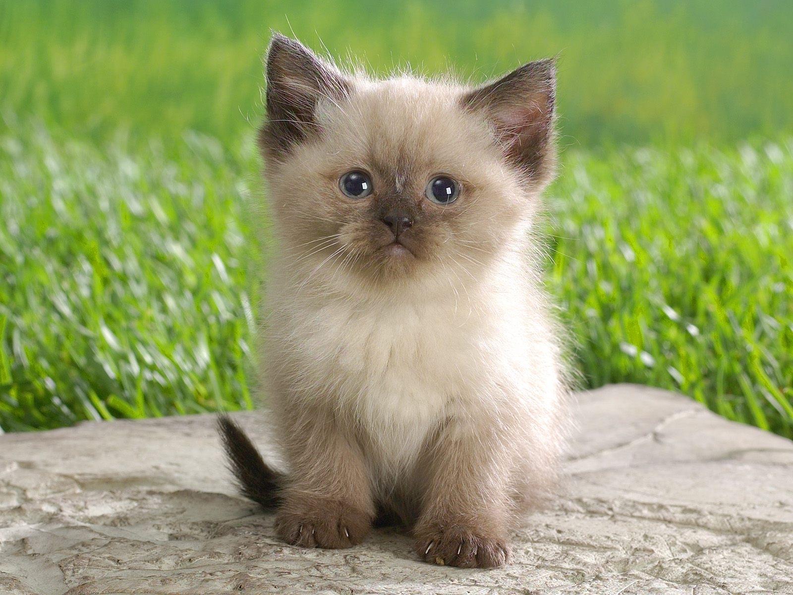 126 скачать обои Животные, Кошки (Коты, Котики) - заставки и картинки бесплатно