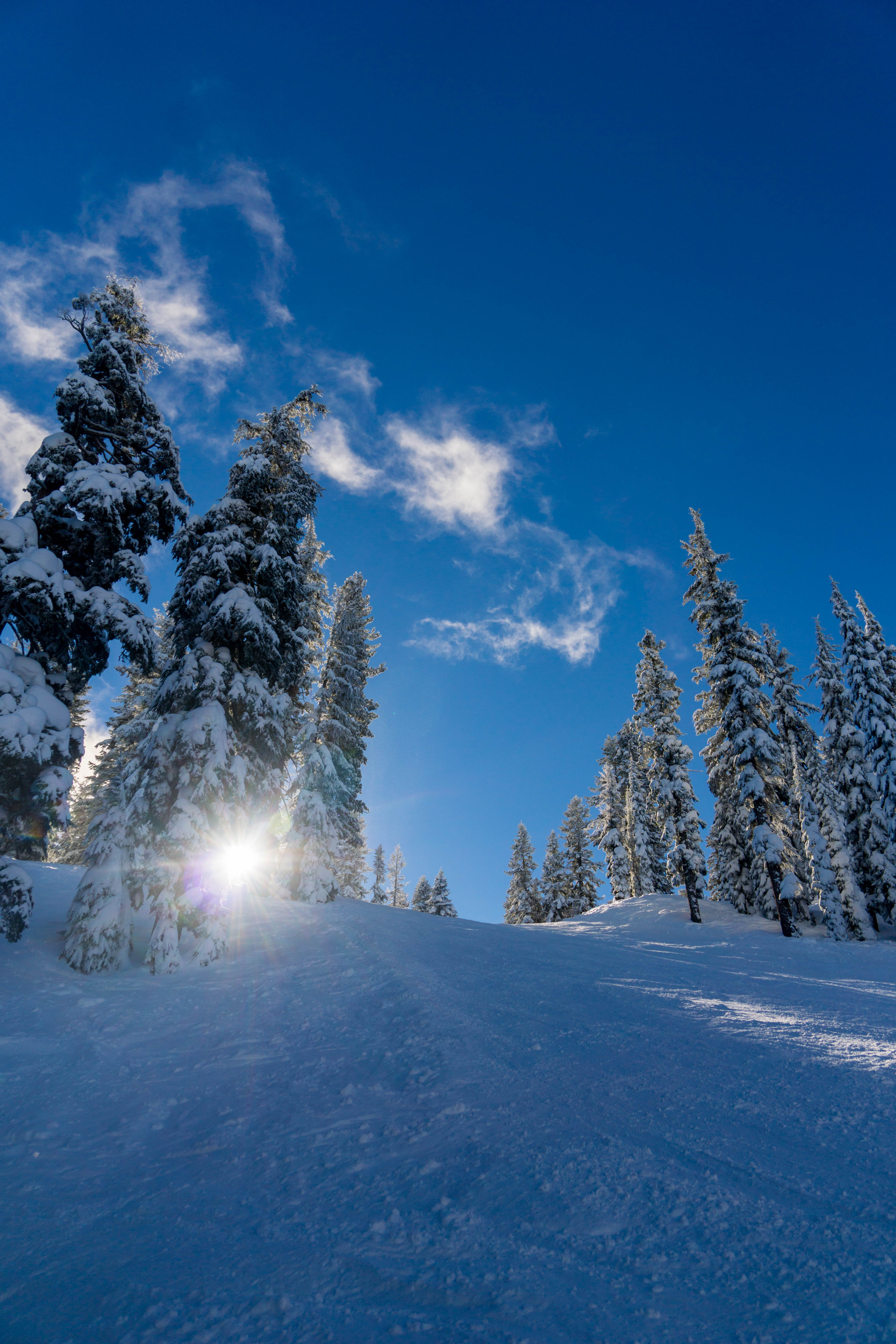 111475 download wallpaper Winter, Nature, Trees, Snow, Forest, Sunlight, Elevation screensavers and pictures for free