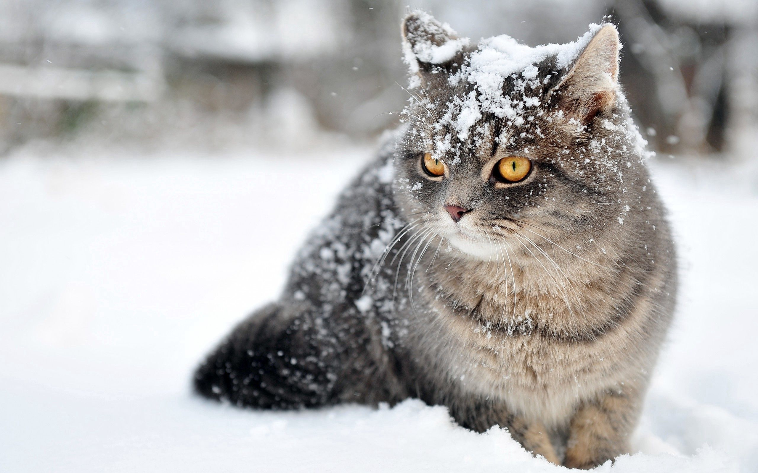 146656 download wallpaper Animals, Snow, Sit, Cat, Fear screensavers and pictures for free