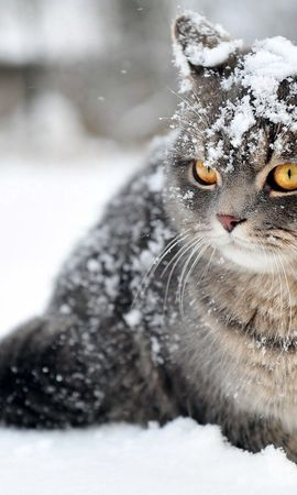 146656 download wallpaper Animals, Cat, Snow, Sit, Fear screensavers and pictures for free