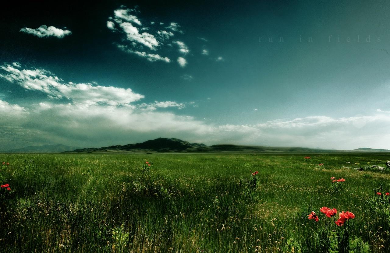 4724 скачать обои Пейзаж, Трава, Небо - заставки и картинки бесплатно