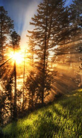 20767 скачать обои Пейзаж, Деревья, Солнце, Сосны - заставки и картинки бесплатно