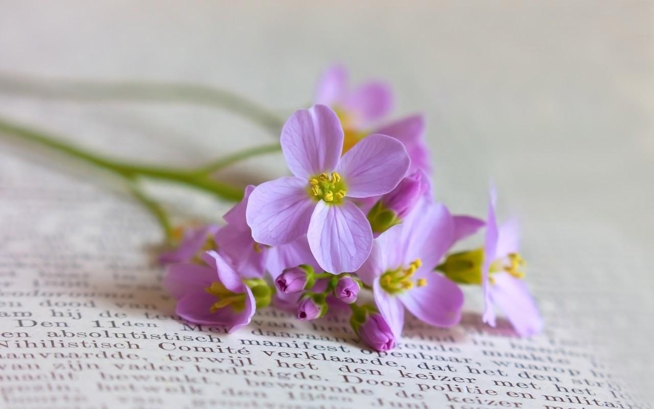 17324 скачать обои Растения, Цветы, Натюрморт - заставки и картинки бесплатно