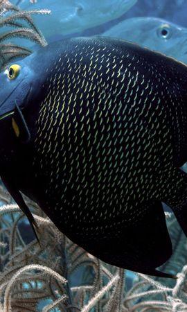116311壁紙のダウンロード動物, 水中の世界, 水中ワールド, 魚, 海藻, 藻, 泳ぐには, 泳ぐ-スクリーンセーバーと写真を無料で