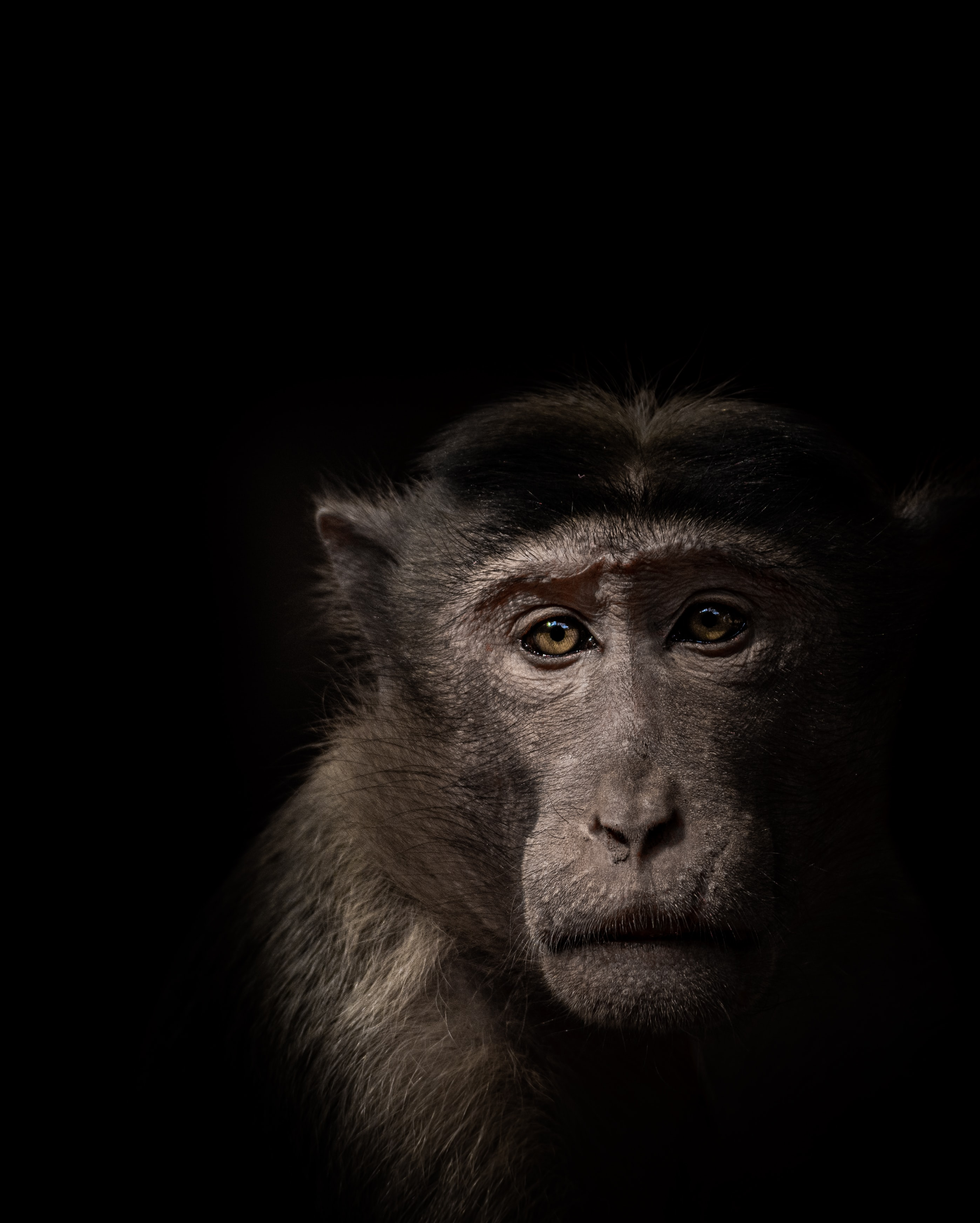 104487 download wallpaper Animals, Monkey, Muzzle, Animal screensavers and pictures for free