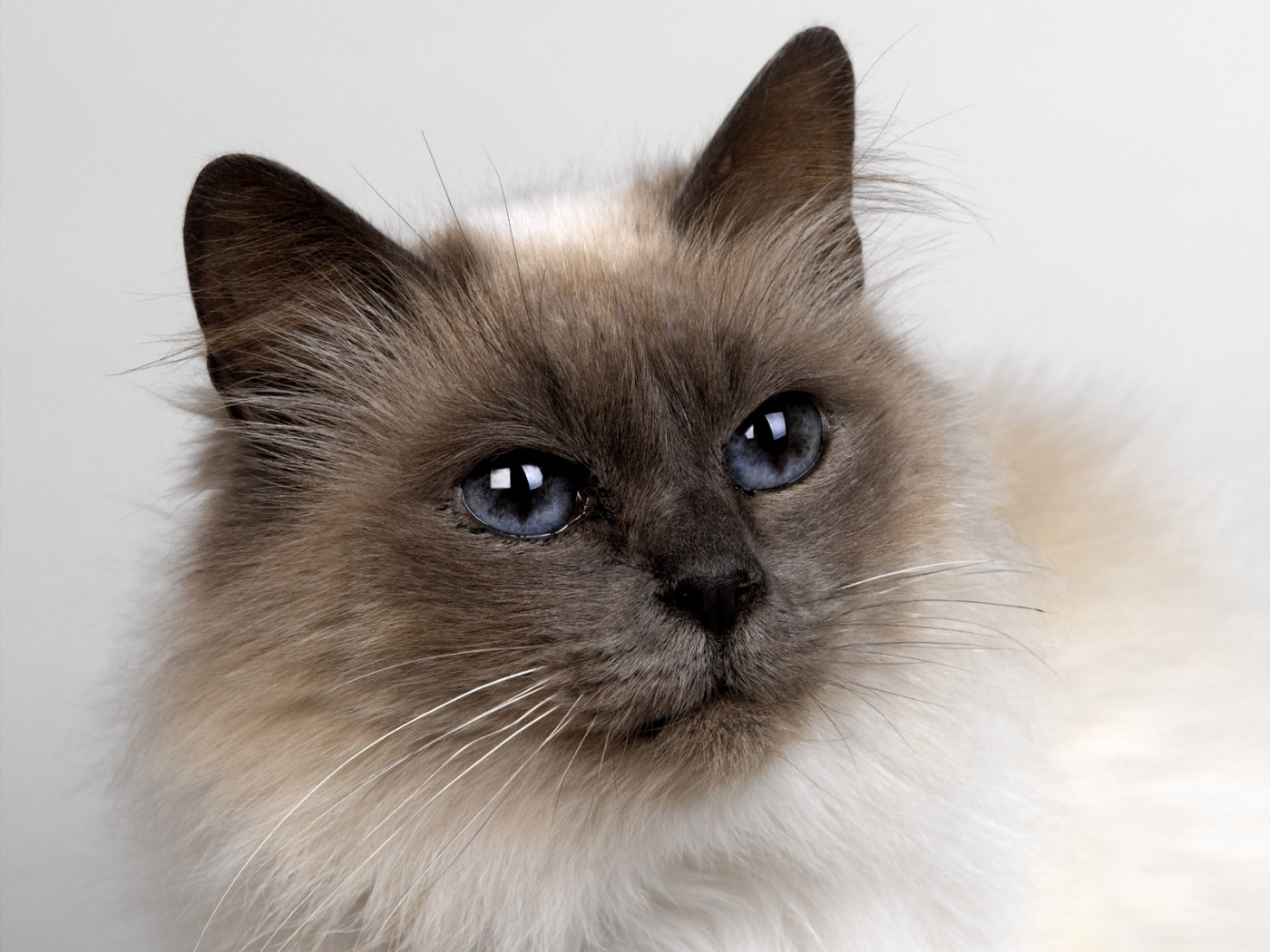 48193 скачать обои Животные, Кошки (Коты, Котики) - заставки и картинки бесплатно