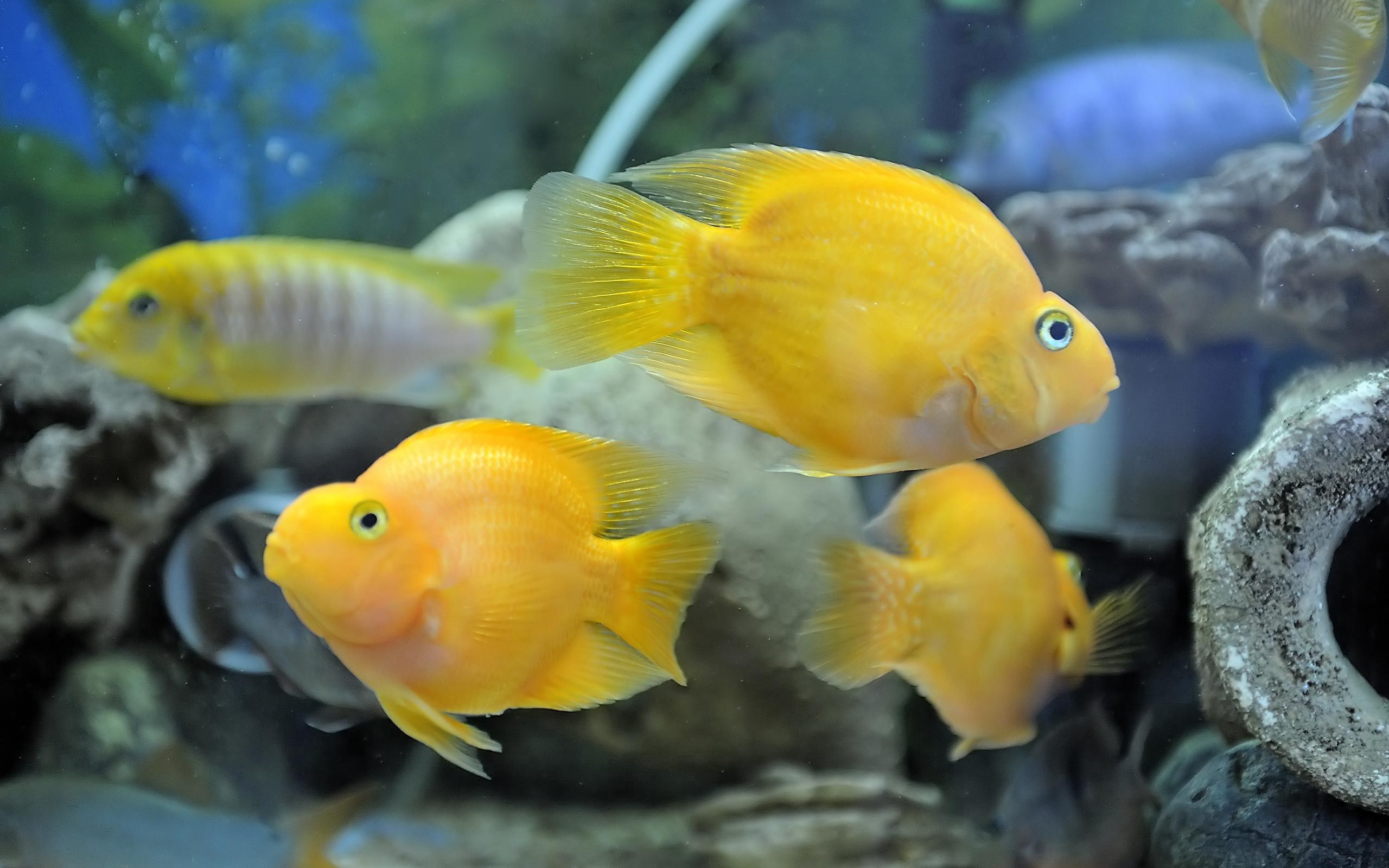 91174 download wallpaper Animals, Underwater World, To Swim, Swim, Fishes screensavers and pictures for free