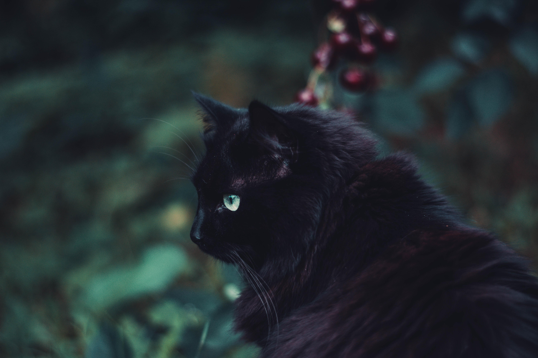 84945 Hintergrundbild 720x1280 kostenlos auf deinem Handy, lade Bilder Tiere, Der Kater, Katze, Flauschige, Sicht, Meinung, Schwarzer Kater, Black Cat 720x1280 auf dein Handy herunter