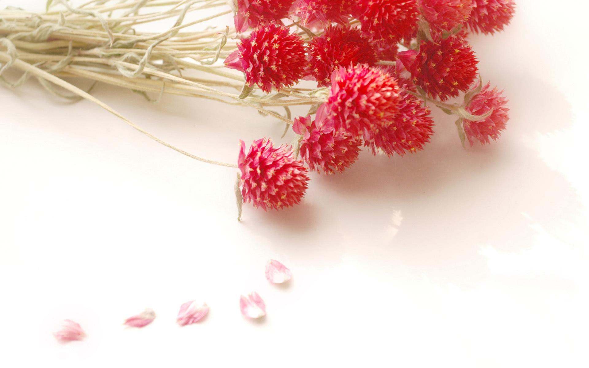 22885 скачать обои Растения, Цветы, Букеты - заставки и картинки бесплатно
