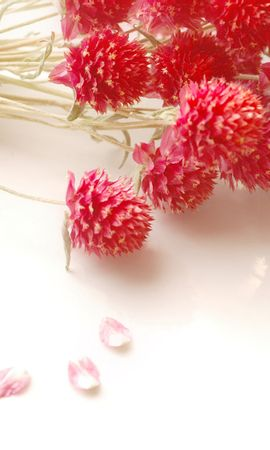 22885 télécharger le fond d'écran Plantes, Fleurs, Bouquets - économiseurs d'écran et images gratuitement