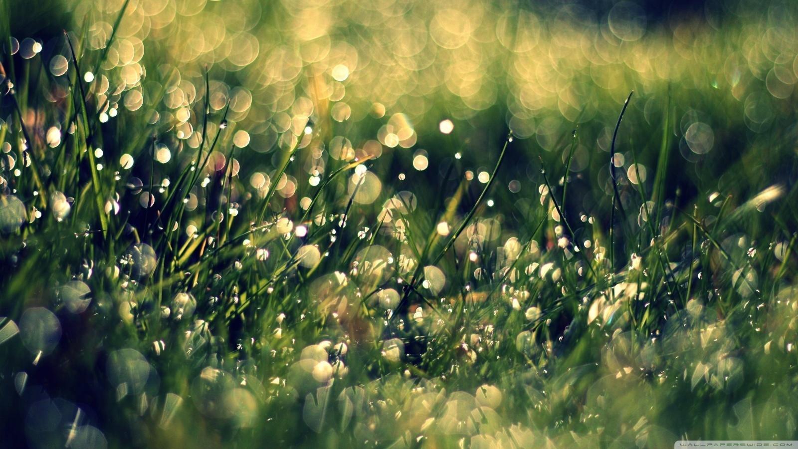 16584 скачать обои Растения, Трава, Фон, Капли - заставки и картинки бесплатно