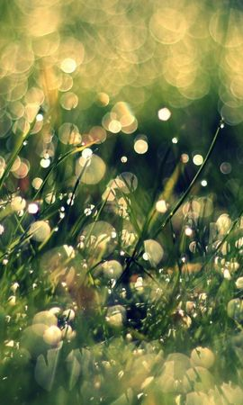 16584 download wallpaper Plants, Grass, Background, Drops screensavers and pictures for free